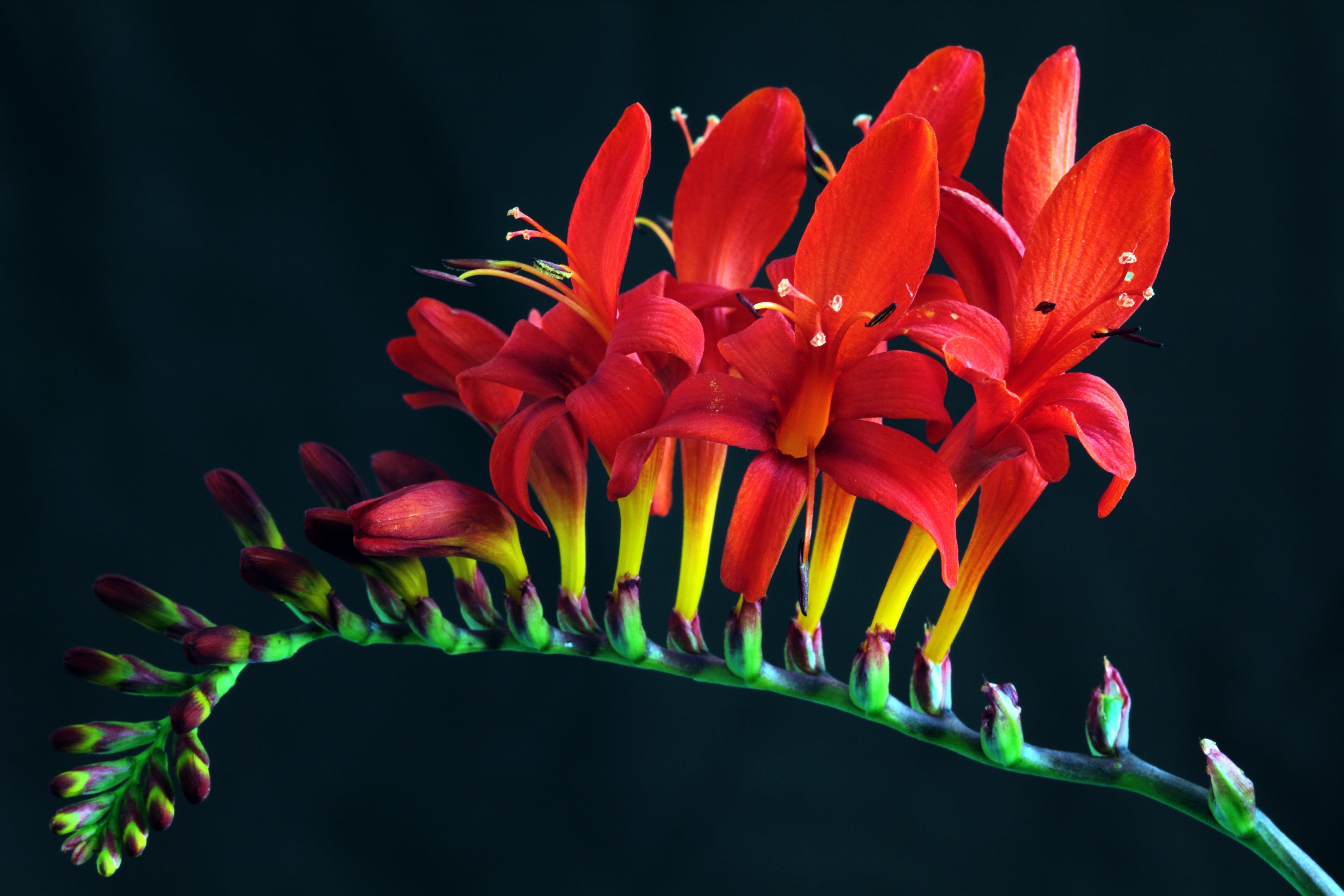 barevný, barvy, botanický