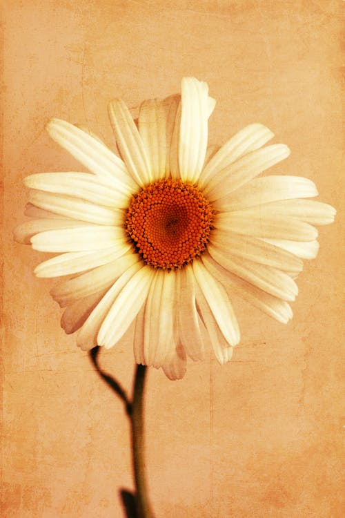 Free stock photo of bloom, blooming, botanist, botany