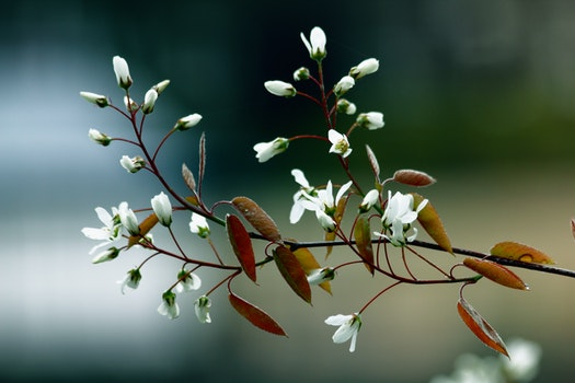 Free stock photo of nature, flowers, branches, plant