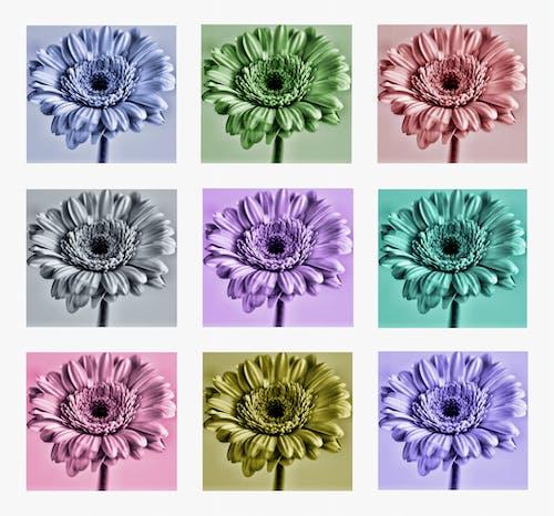 Free stock photo of art, botany, coloured, colourful