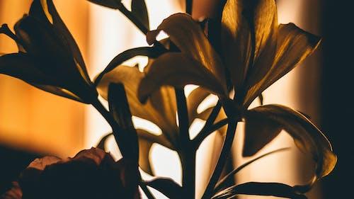 廠, 植物群, 綻放, 背光 的 免費圖庫相片