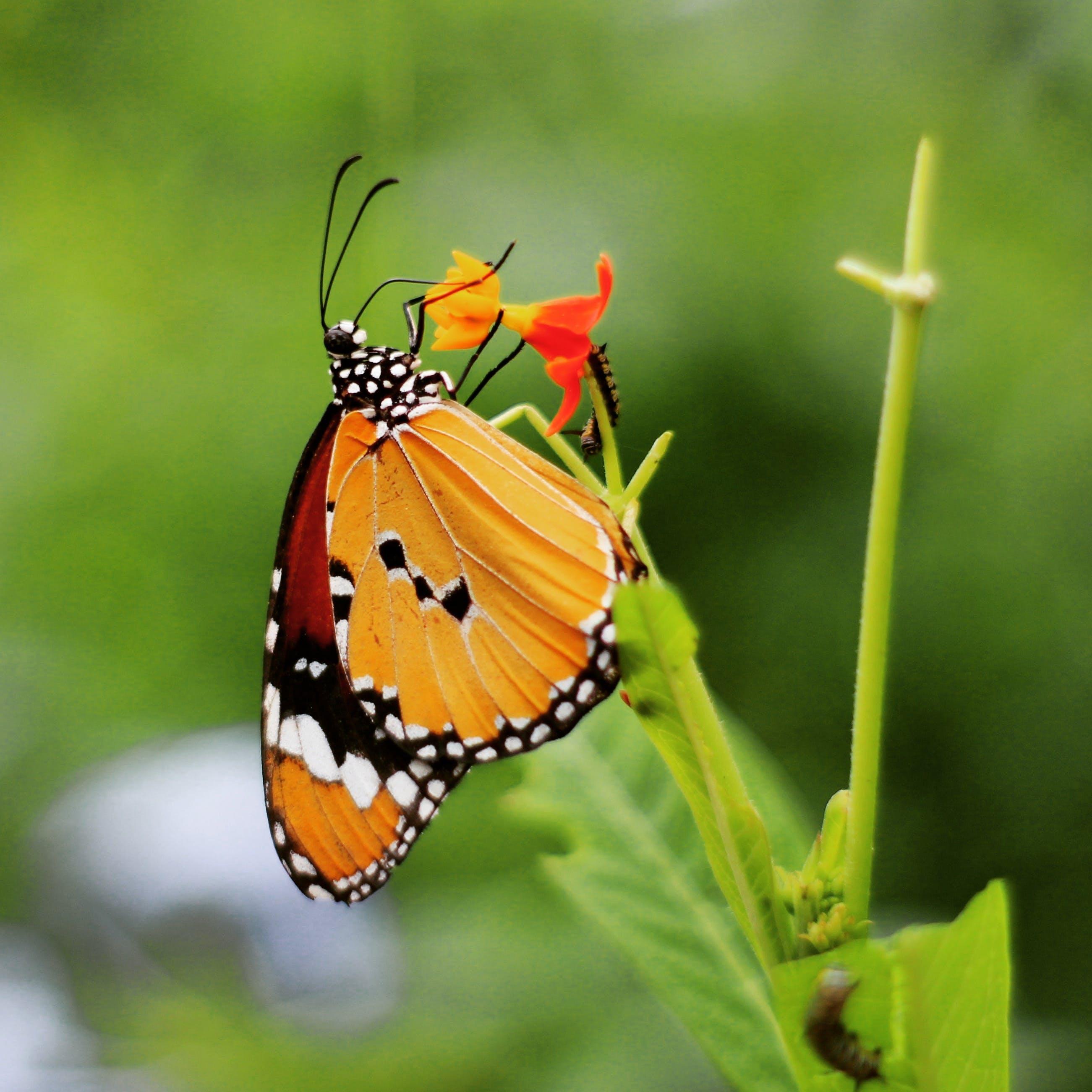 Free stock photo of #butterfly #sumner #wildlife #wildlifephotography