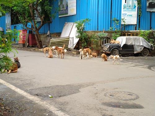 Δωρεάν στοκ φωτογραφιών με vintage αυτοκίνητο, αδέσποτα σκυλιά