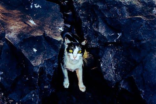 검은 고양이, 고양이, 귀여운 얼굴, 동물의 무료 스톡 사진