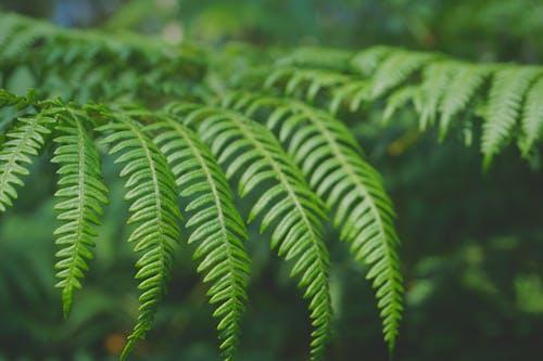 Kostnadsfri bild av grön, ormbunke