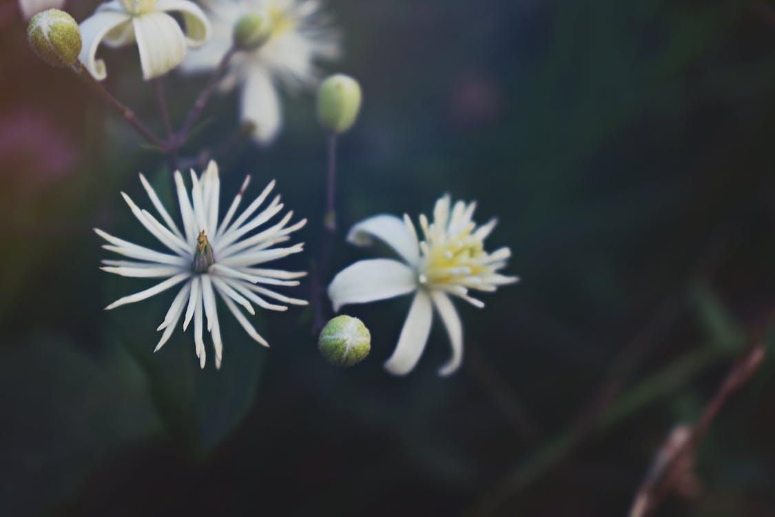 завод, заводи, квіти