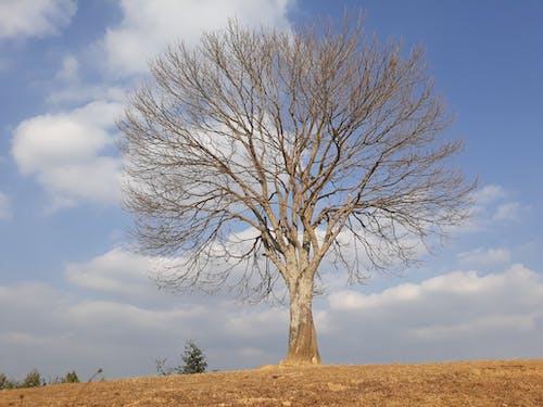 Foto profissional grátis de árvore, bhaktapur, maligaun, Nepal
