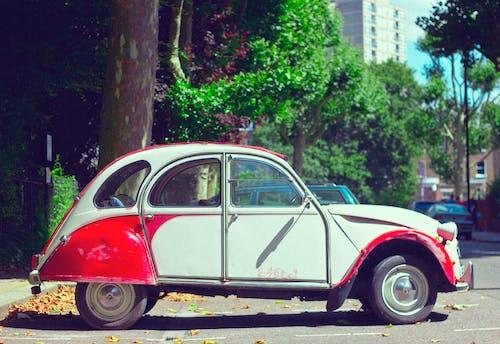 Foto stok gratis beetle, diparkir, jalan, kepik