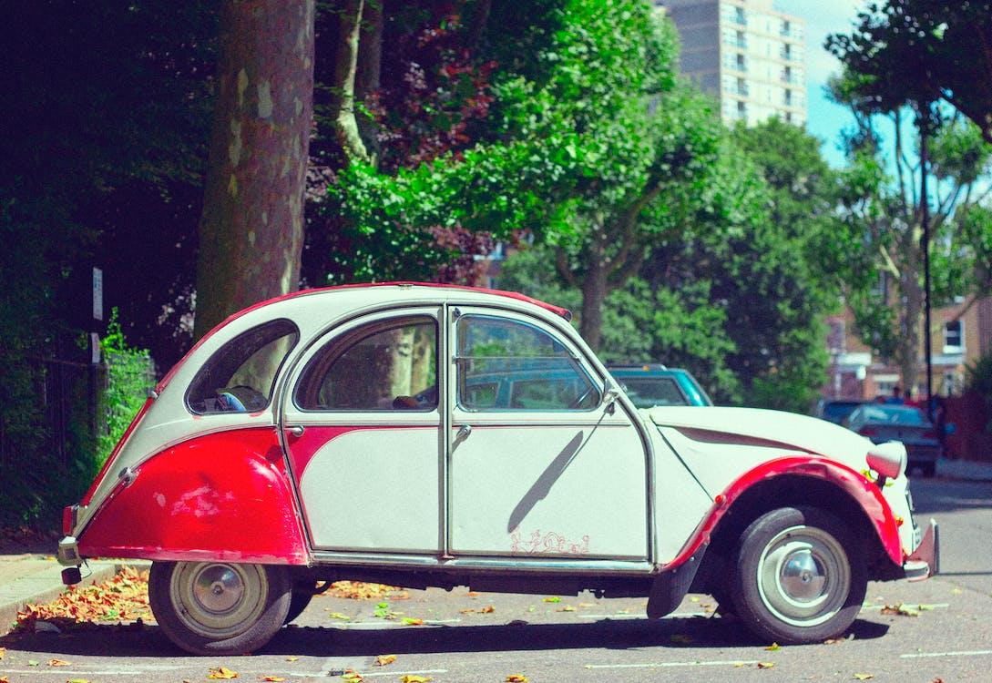 automobil, automobil beetle, cărăbuș