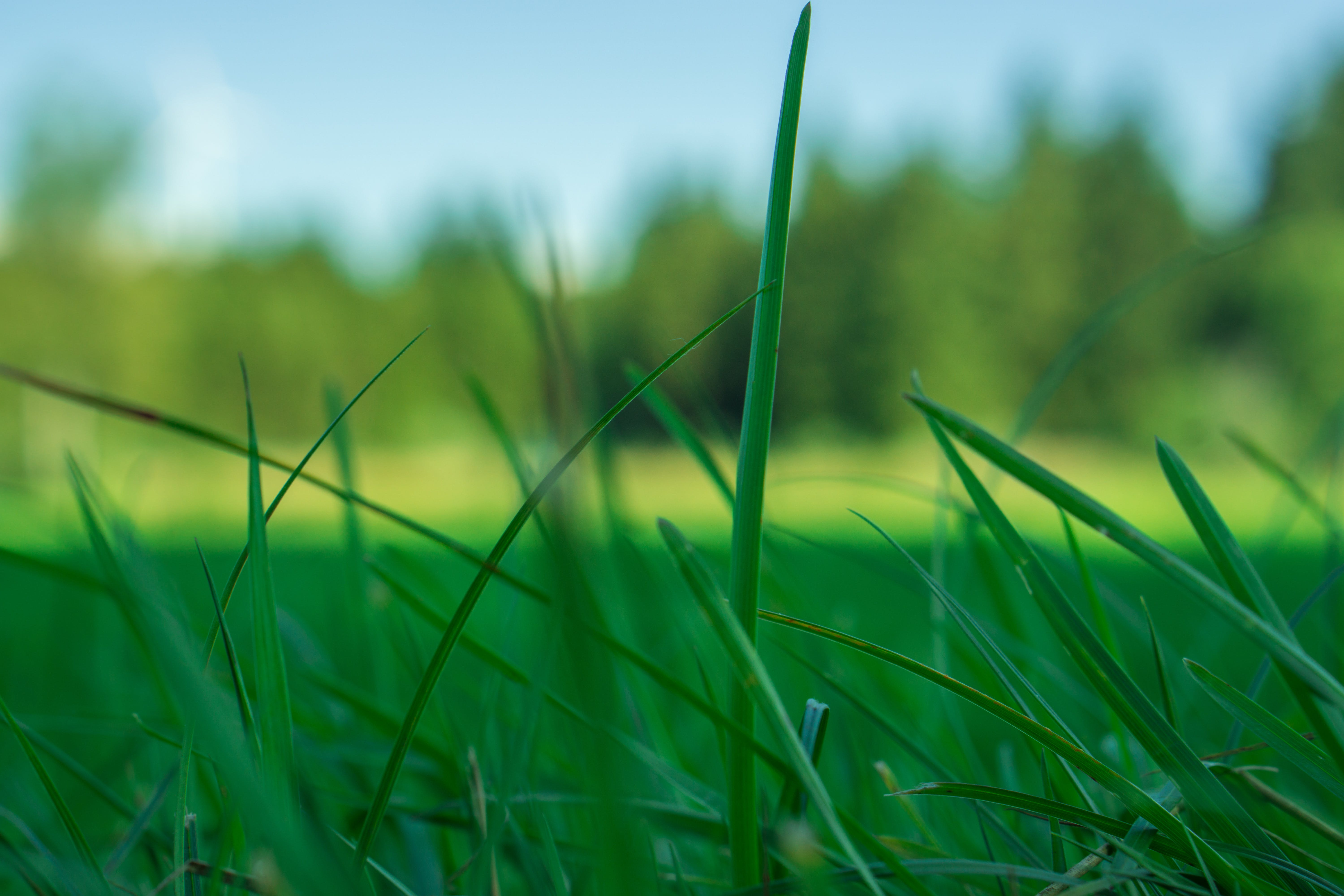 Free stock photo of grass, green, lawn, meadow