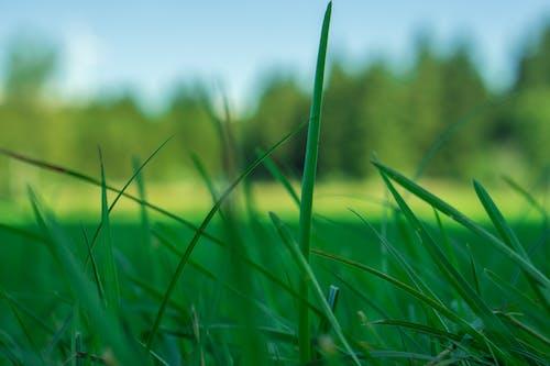 天性, 綠色, 草, 草地 的 免费素材照片