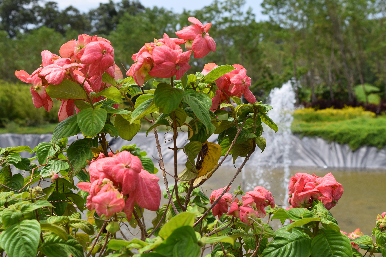 blomster, Indien