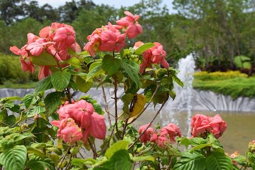Foto stok gratis bunga-bunga, India