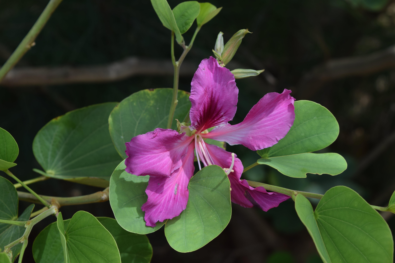 flower, india, wildflower