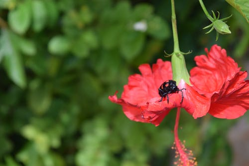 Free stock photo of flower, india, insect