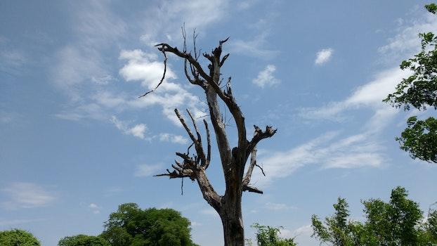 Free stock photo of tree, wild, india