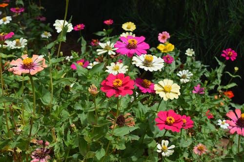 Free stock photo of flowers, india, wildflowers