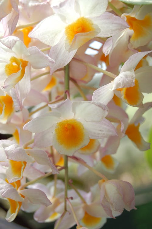 Fotobanka sbezplatnými fotkami na tému kvet, orchidea