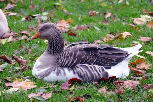Free stock photo of nature, animal, grass, beak