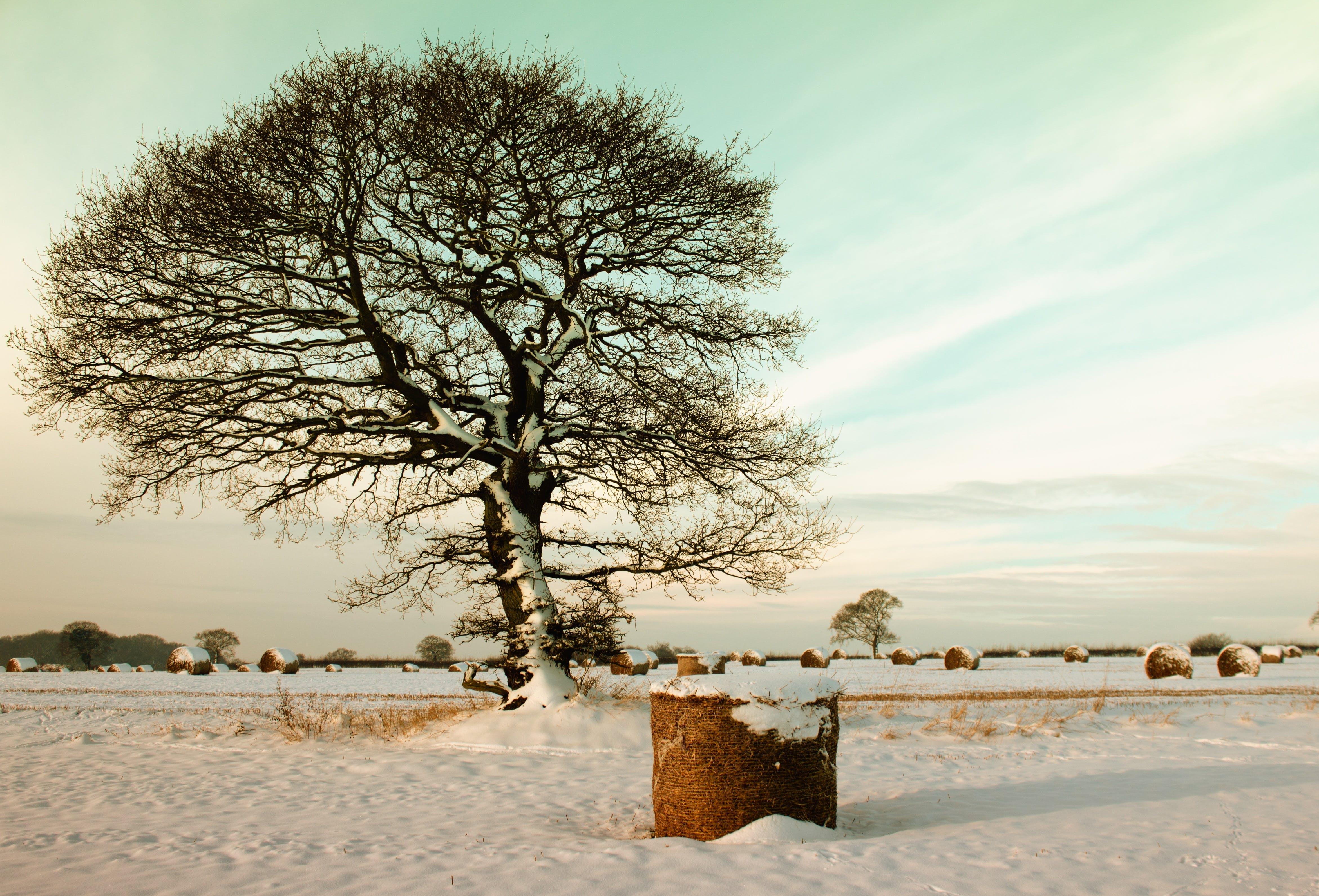 下雪的, 乾草, 冬季, 冬季景觀 的 免费素材照片