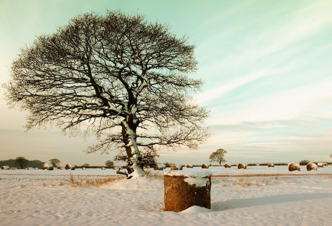 ветви, деревья, живописный