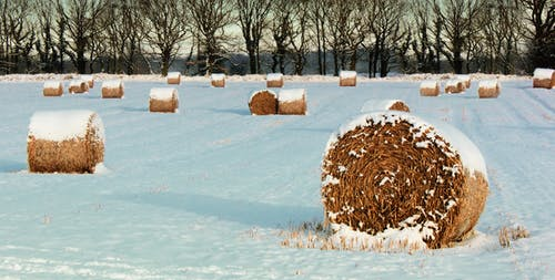 Kostenloses Stock Foto zu bauernhof, bäume, einfrieren, eis