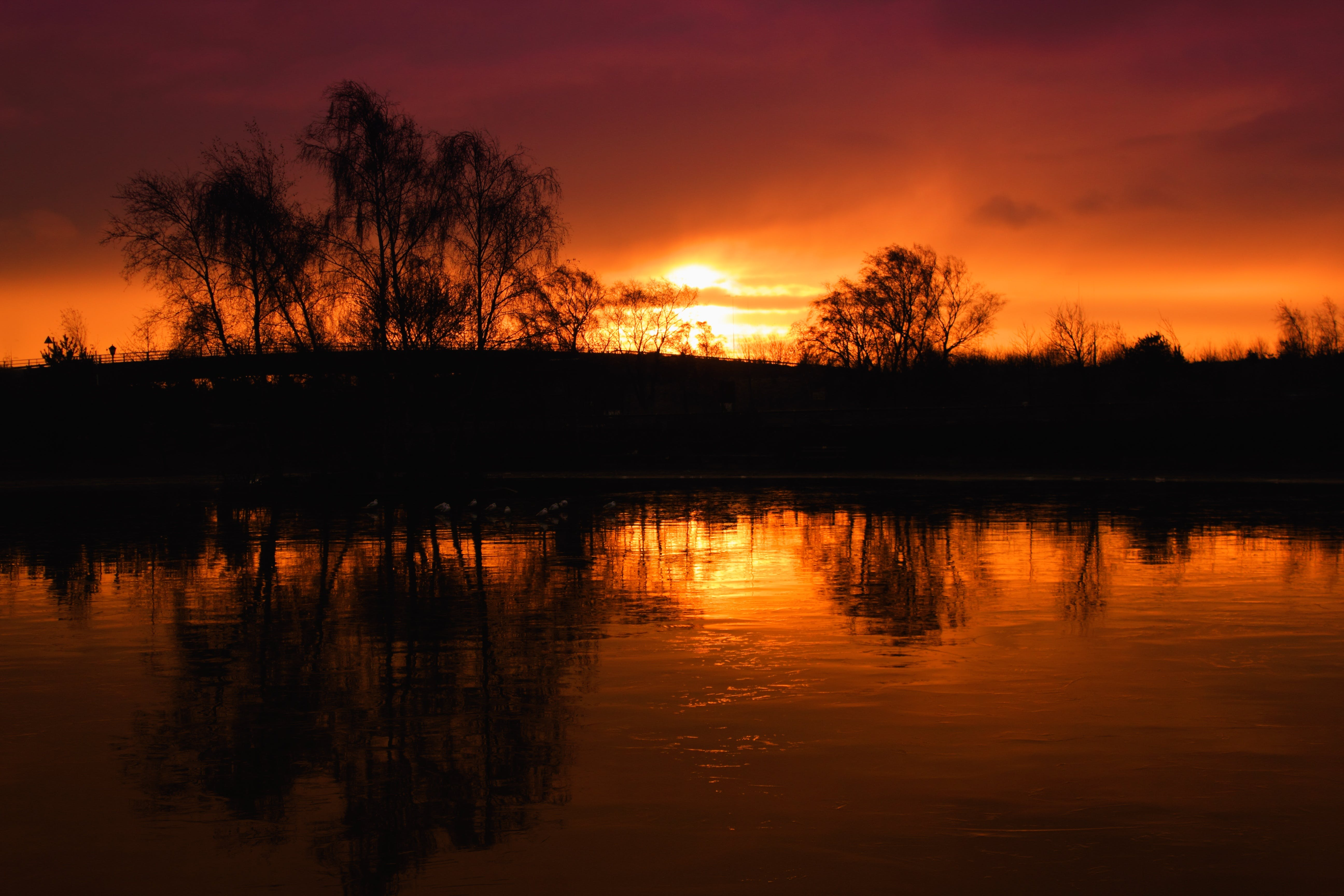 Silhouette of Trees at Sunset Landscape Photography