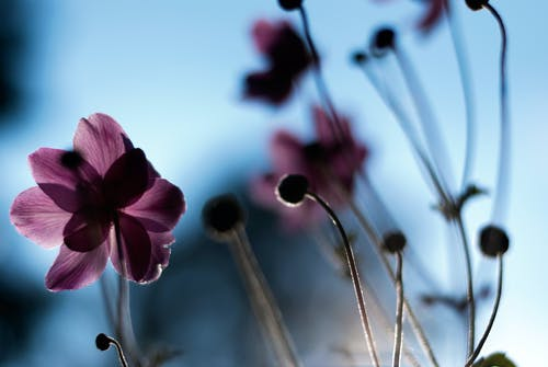 Kostnadsfri bild av bakgrundsbilder mac, blommor, blomning, flora