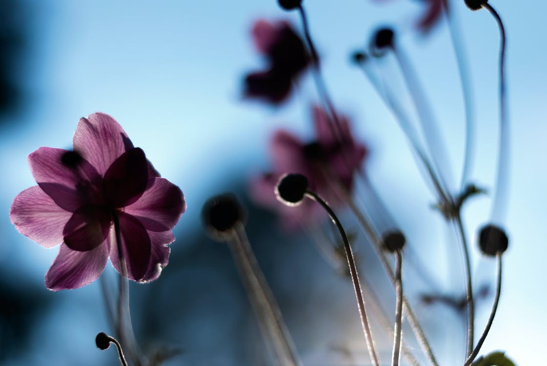 flóra, HD tapeta, kvést