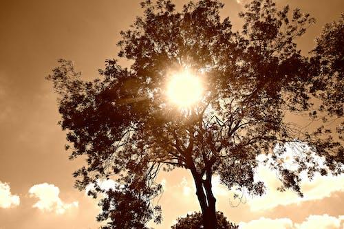 Free stock photo of sky, sun, sun shining through tree, sunlight