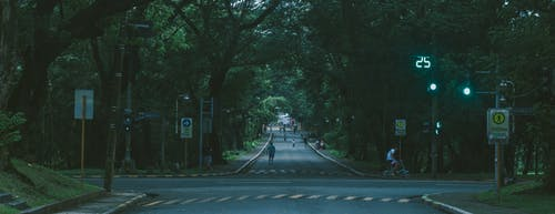 Free stock photo of diliman, street, trees