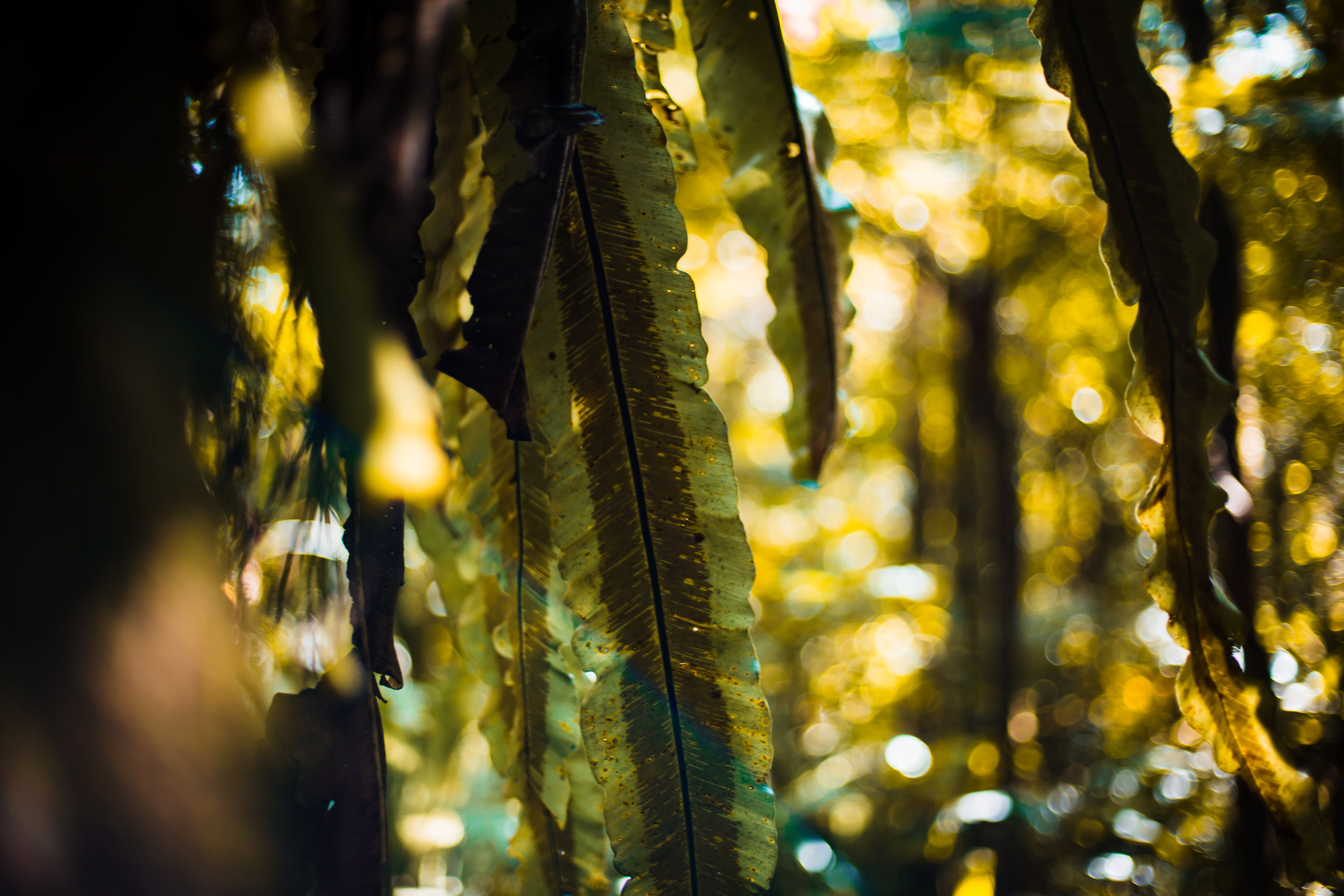 Free stock photo of bokeh, fern leaves, forest, green