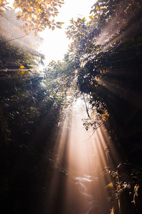 Ingyenes stockfotó alacsony szögű fényképezés, erdő, fák, festői témában