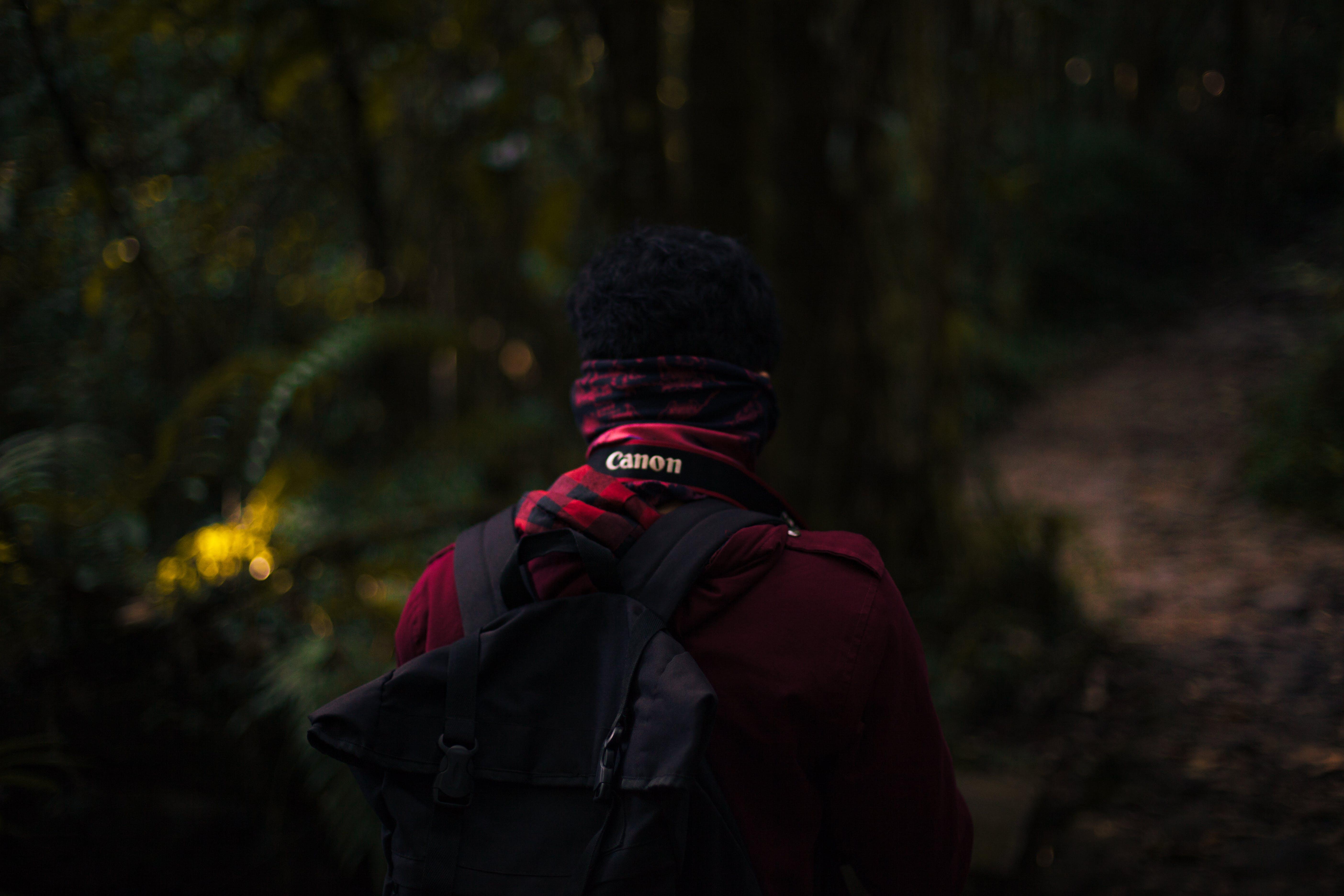 Free stock photo of adventure, canon, jungle, lush