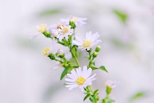 꽃, 꽃봉오리, 꽃잎, 나뭇잎의 무료 스톡 사진