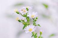 natur, blumen, blütenblätter