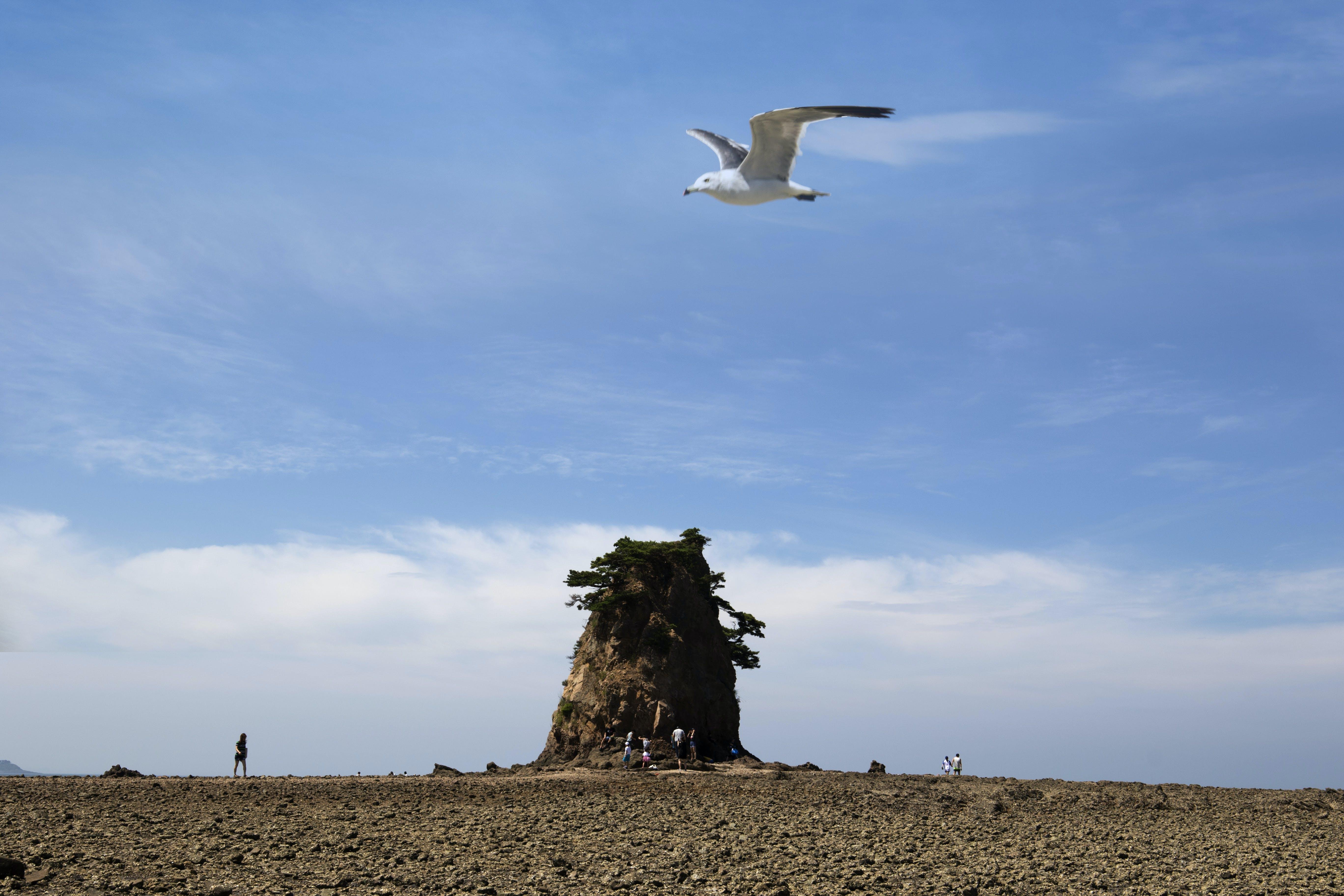 Free stock photo of gull