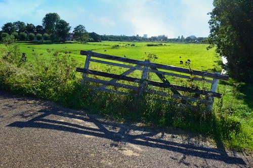Free stock photo of Dutch landscape, gate, Holland, landscape