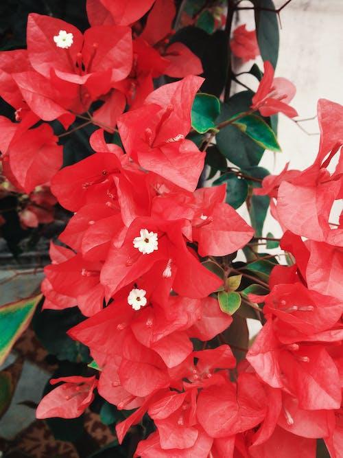 Foto d'estoc gratuïta de Adobe Photoshop, amor, flor, foto de flors de paper