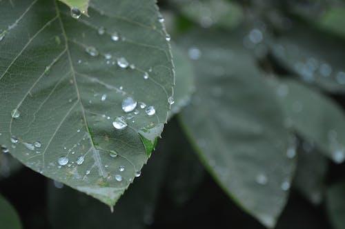 Free stock photo of green, water drop