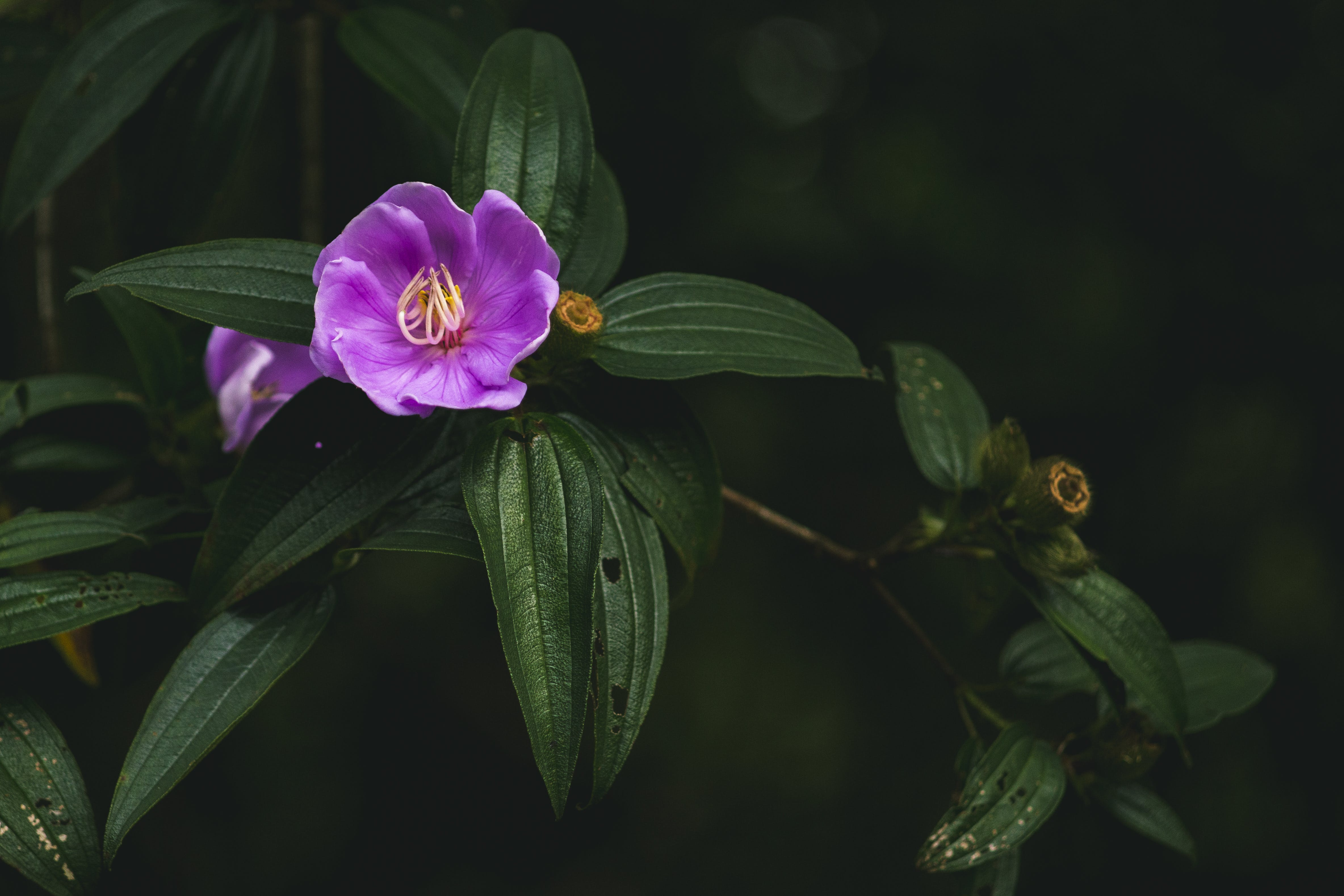 Closeup Photo of Purple Petaled Flower