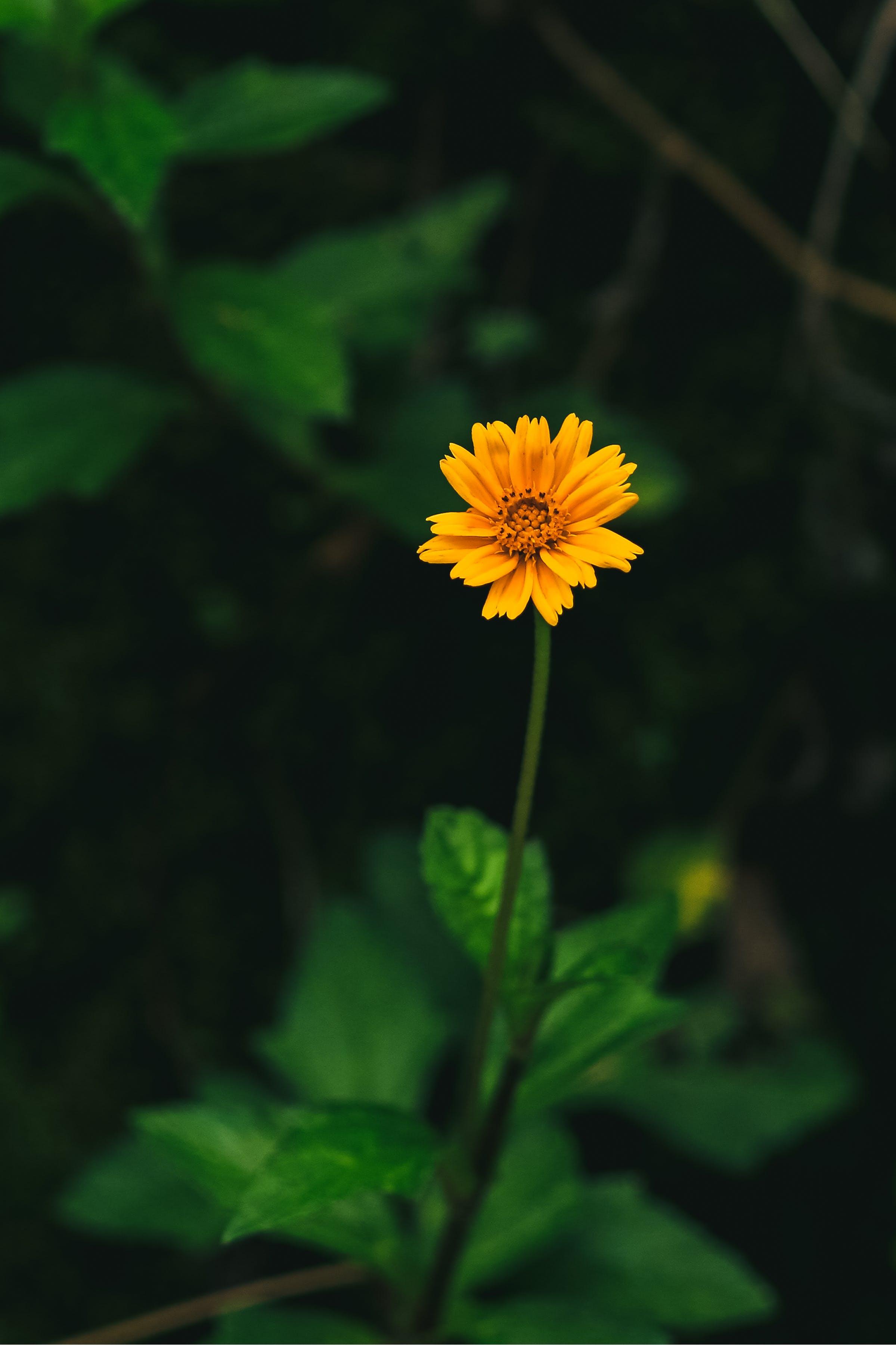açık, Bahçe, bitki