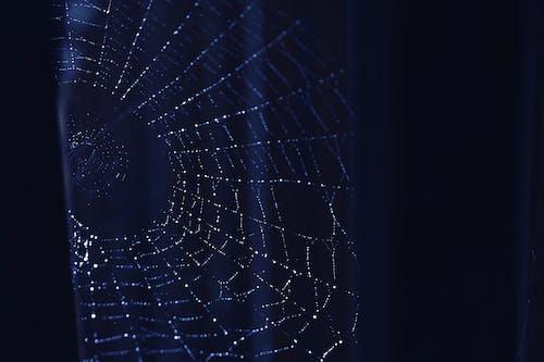 Gratis arkivbilde med edderkoppnett, natt, nett, spindelvev