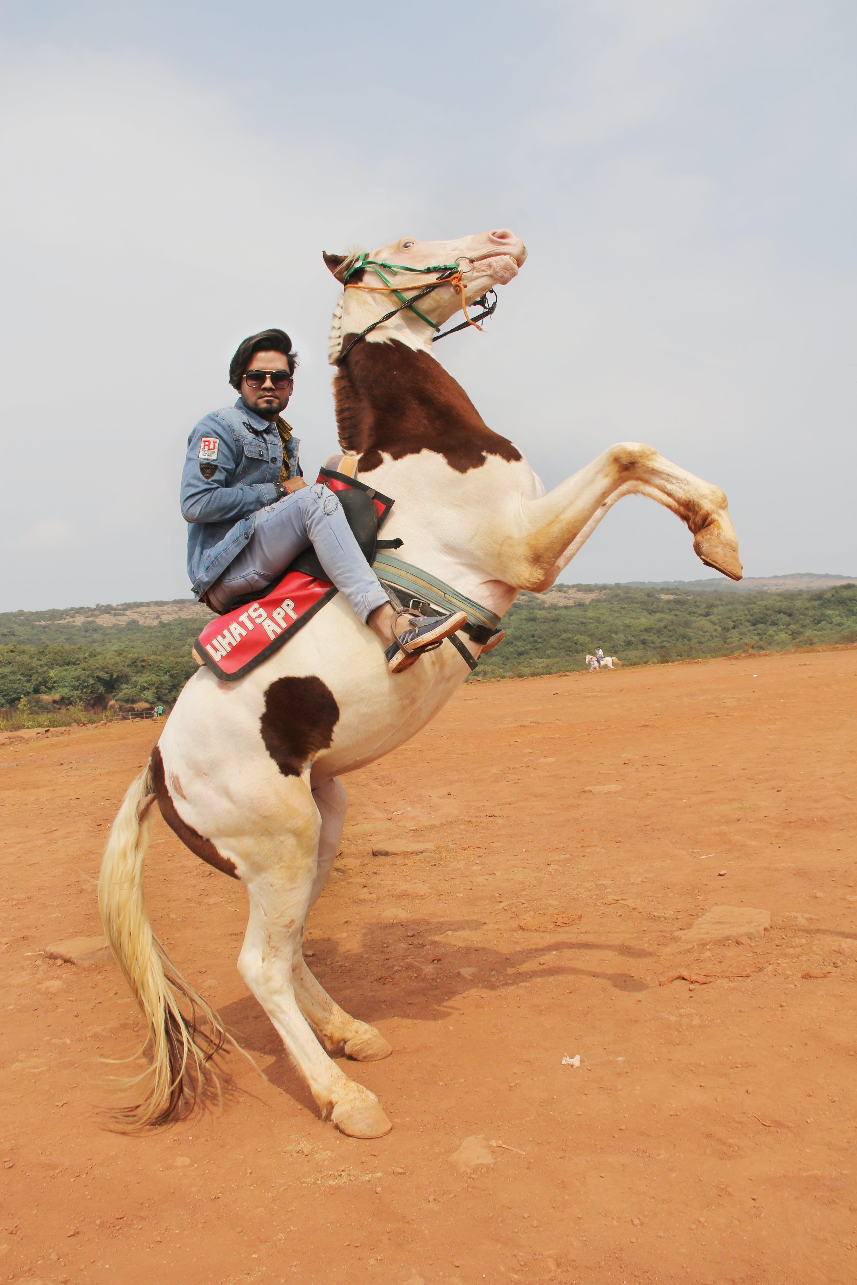 Free stock photo of horse rider