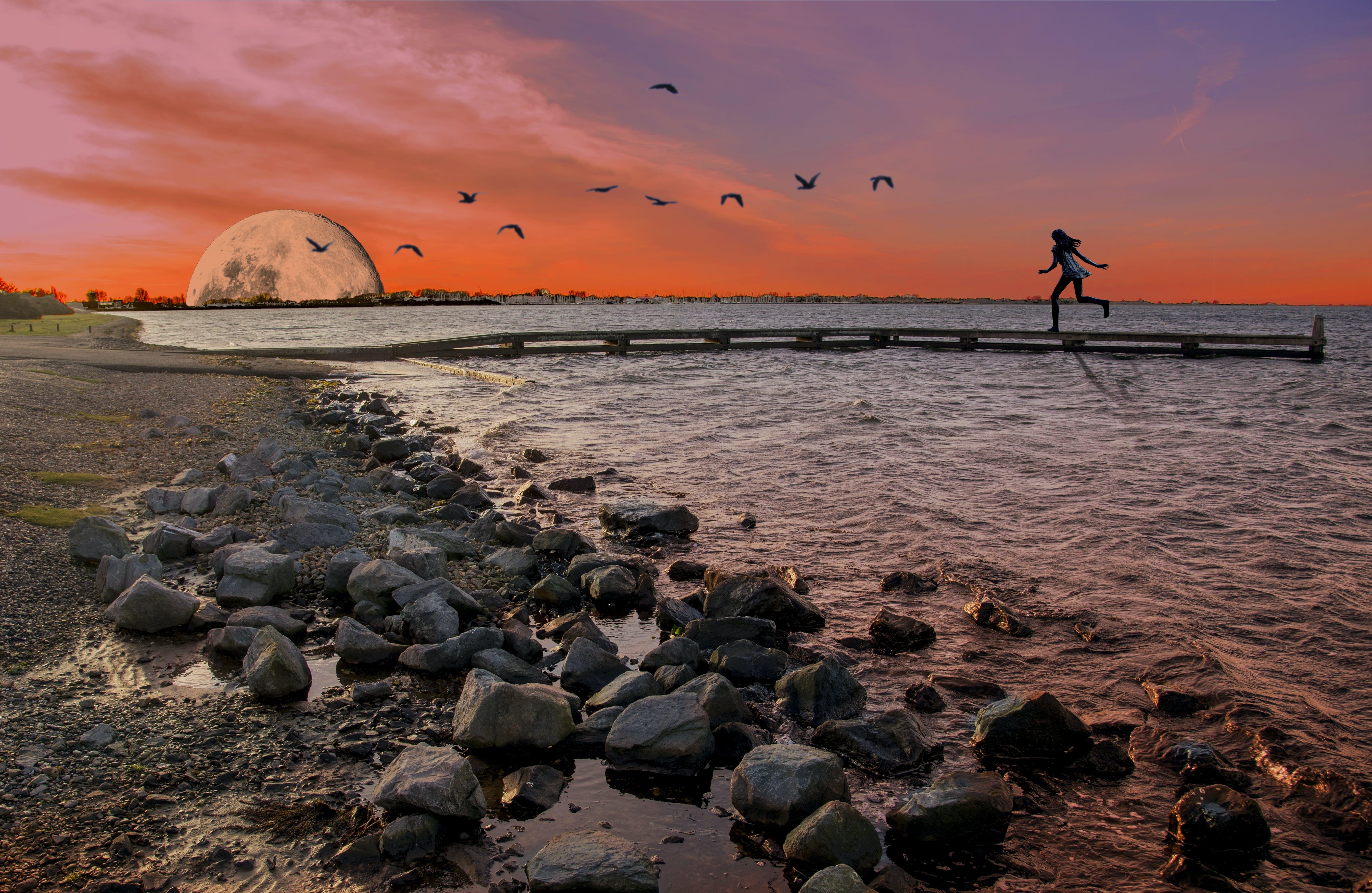 Free stock photo of birds, golden sunset, lake, moon