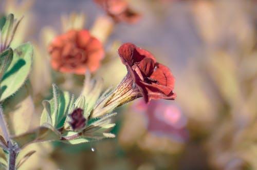 Darmowe zdjęcie z galerii z kwiat