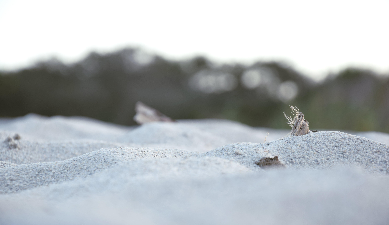 Free stock photo of landscape, nature, ocean poseidonia, poseidonia