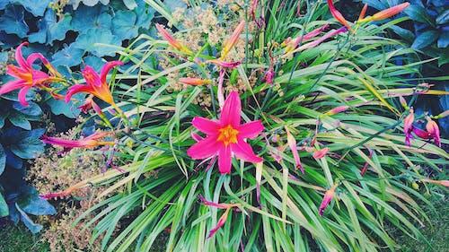Free stock photo of beautiful, bloom, blossom, flora