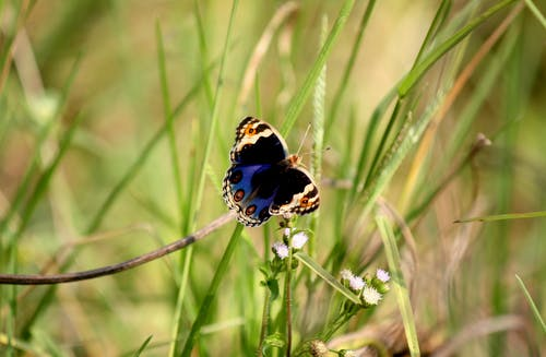 Blue and Brown Butterfly Perched on Grass