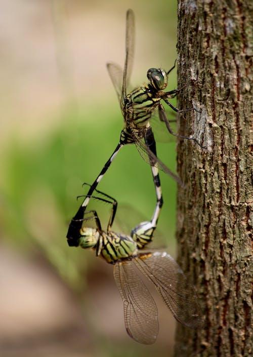 原本, 天性, 宏觀, 害蟲 的 免费素材照片